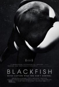 Holistic Living With Rachel Avalon Documentary Blackfish