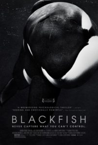 Holistic Living With Rachel Avalon Documentary Blackfish