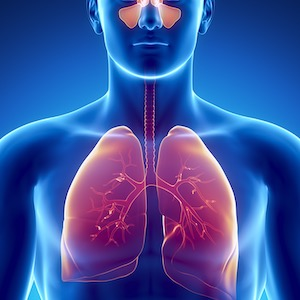Healthy Lungs and Respiratory System