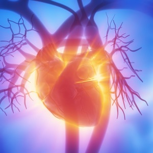 A Healthy Heart and Cardiovascular System