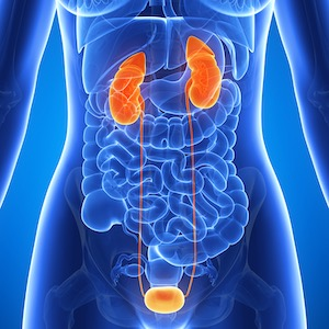 Healthy Kidneys & Urinary System